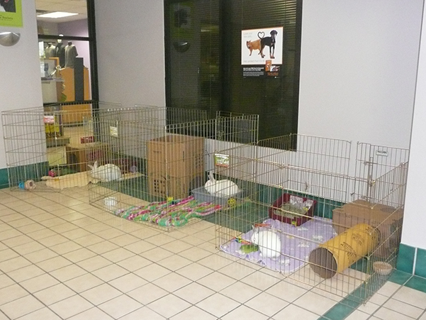 Humane Society Rabbits